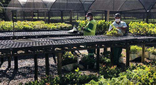 Secretaria de Turismo entrega 840 mudas de árvores ao Conservador das Águas